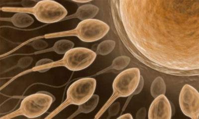 No todo es calidad en el esperma