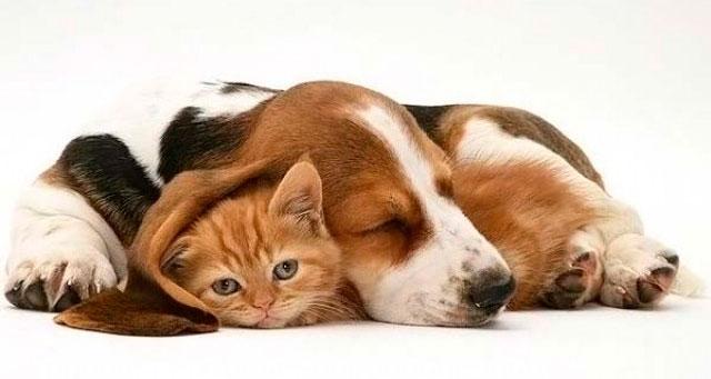 Pon una mascota en tu vida