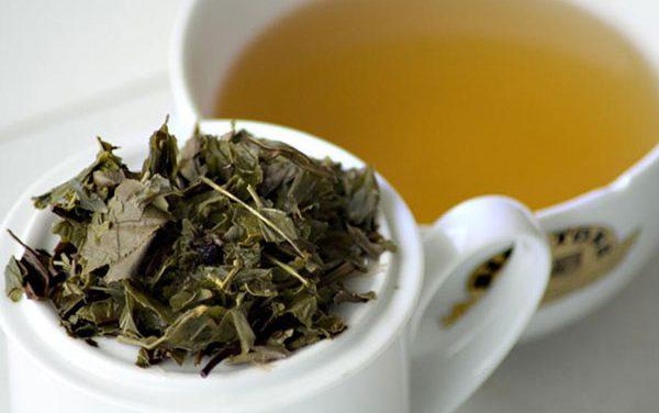 Té blanco, el antioxidante más potente de la naturaleza