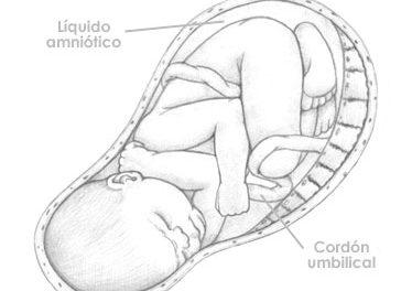 Treintaiocho  semanas de embarazo
