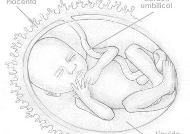 Veintiuna semanas de embarazo
