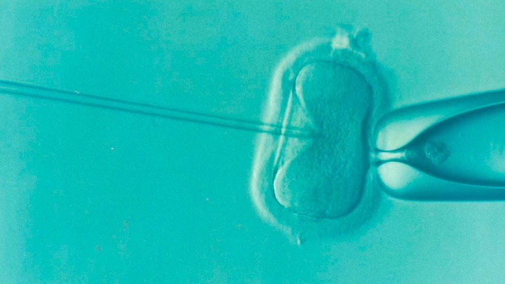 Las tasas de éxito en los tratamientos de reproducción asistida